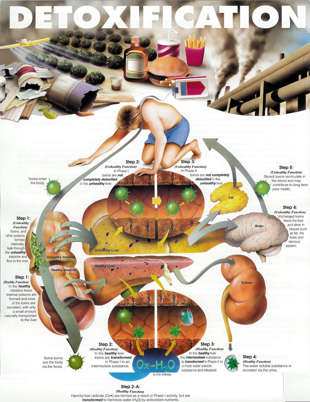 detoxification-diet.jpg