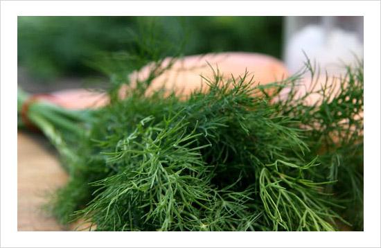dill-healthy-herb.jpg