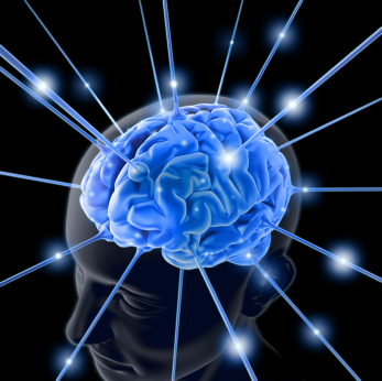 healthy_brain.jpg
