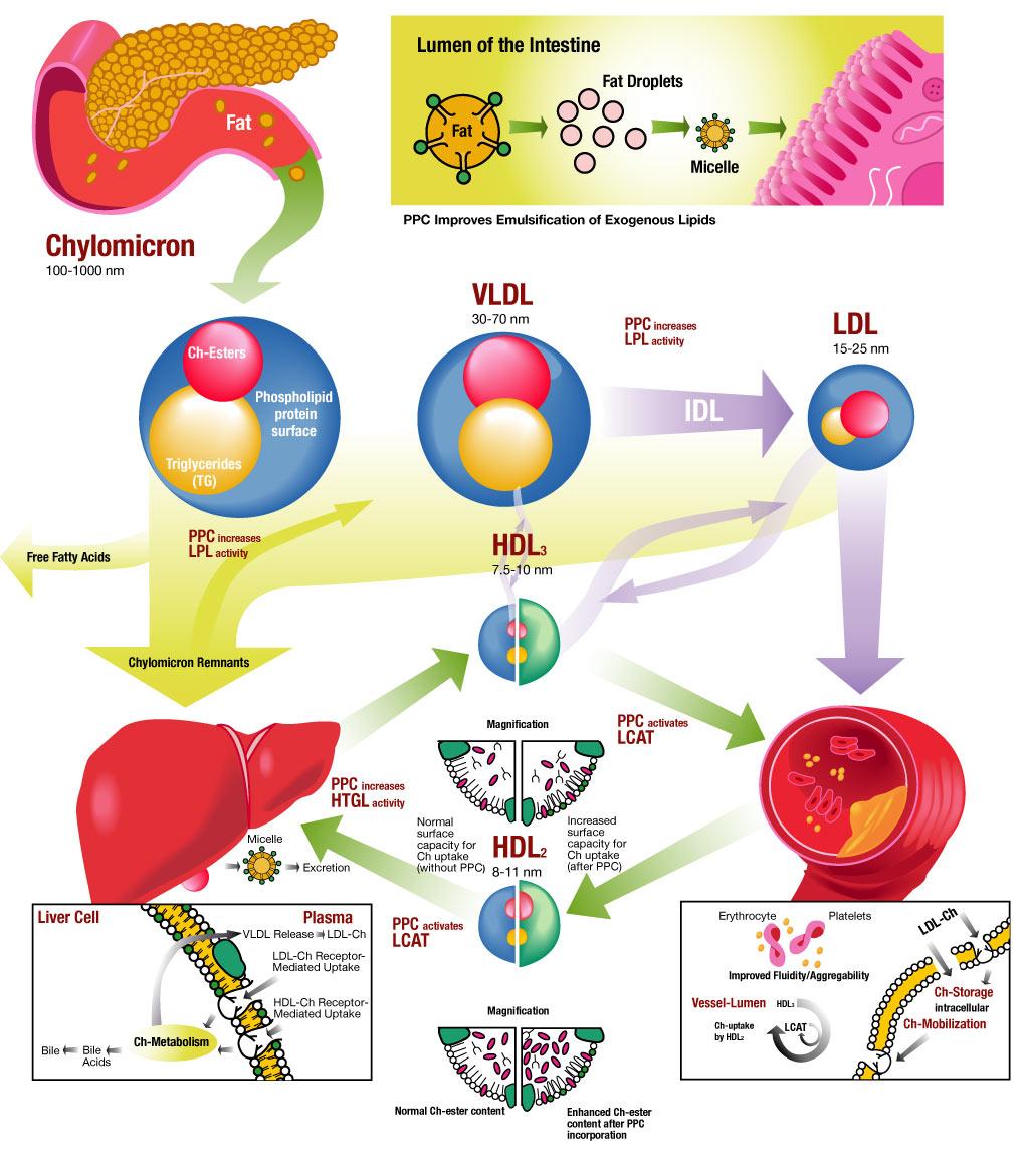 metabolism-map.jpg