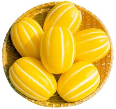 The Yellow Melon Diet For Weight Loss Shed Your Weight